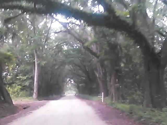 640x480 Canopy, in Boring Pond Road, by John S. Quarterman, 13 April 2015