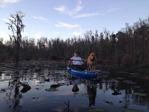 Yellow Dog in jsq boat