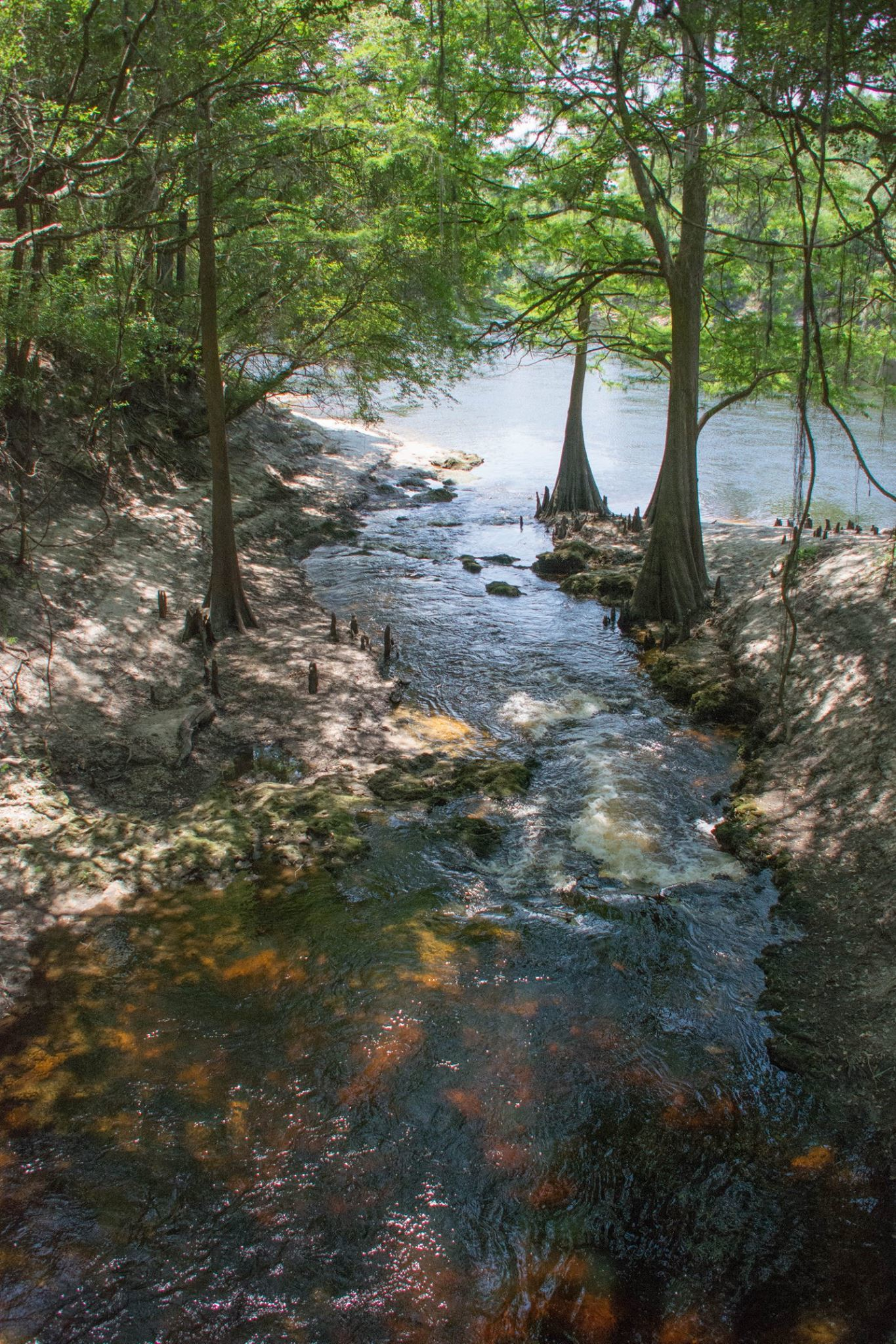 1365x2048 Lime Sink Run from the foot bridge, looking out over the Suwannee River, in Lime Sink Run, by Lori McCraney, 15 May 2016